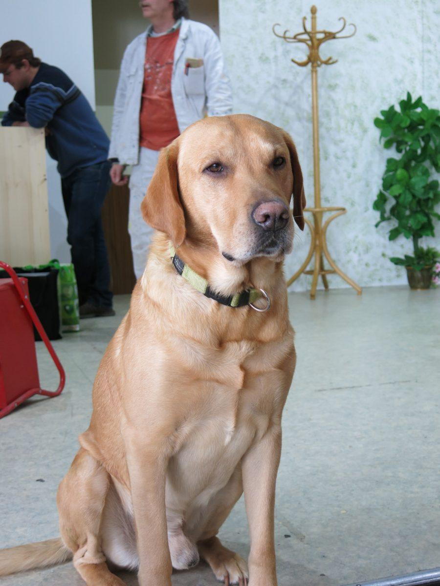 Der Theaterhund